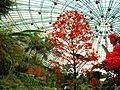 Butterfly park.jpg