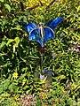 Butterfly trowel - geograph.org.uk - 935143.jpg
