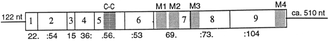 5-HT3 receptor - Image: CDNA structure of the mouse 5HT3 receptor protein