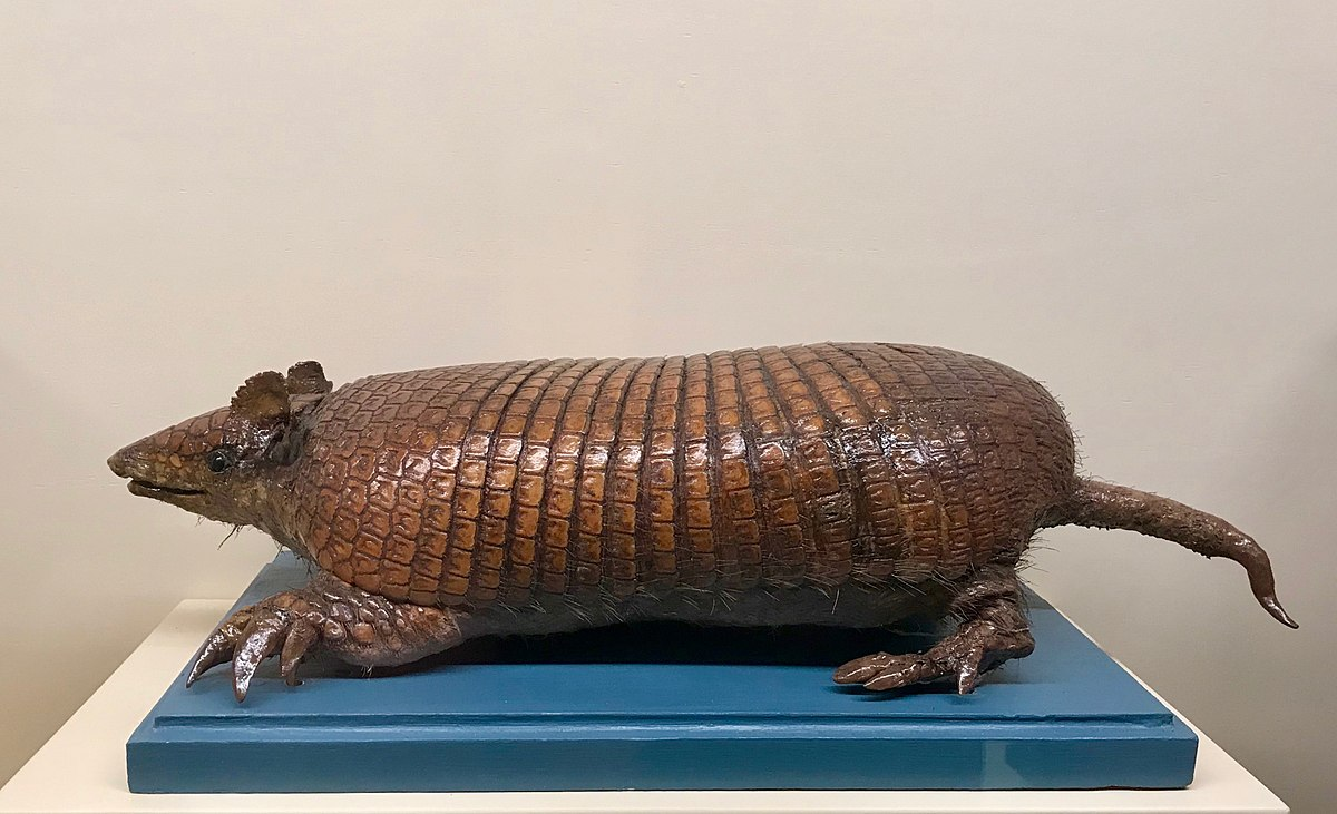 Greater Naked-Tailed Armadillo - Wikipedia-9069