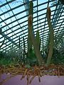 Cacti in the Flower Dome, Gardens by the Bay, Singapore - 20140513-01.jpg
