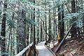 Camino Parc Nacional d'Aigüestortes.JPG
