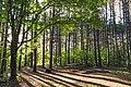 Campground at Savanna Portage State Park, Minnesota (35138676576).jpg