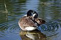 Canada Goose Wilmington.jpg