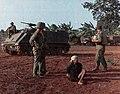 Captured VC, Operation Abilene, April 1966.jpg