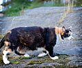 Cat Outside in Sweden-148880.jpg
