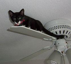 Ceiling Fan Or Not