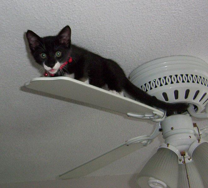 Ceiling Fan Cat Gif