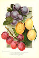 Chase fruit and flowers in natural colors (Page 25) (6237560570).jpg