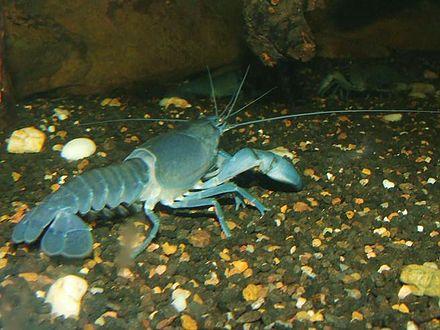 tuer crabe aquarium eau de mer
