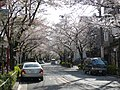 Cherry blossom snow on Kamuro-zaka slope 禿坂 - panoramio.jpg