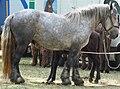 Chevaux de trait, exposition à Mirabel en Ardèche 04.jpg