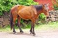 Chile-02793 - I need a saddle.... (49072799456).jpg
