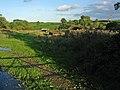 Clawson Hill - geograph.org.uk - 68526.jpg