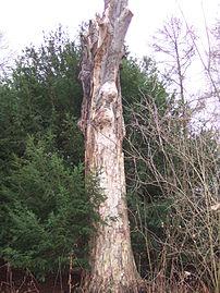 Coarse woody debris.