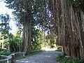 Coco Grove FL Kampong path01.jpg