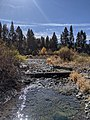 Cold Creek (Donner Creek tributary).jpg