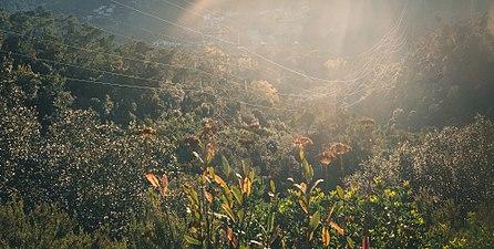 Collserola sun2.jpg
