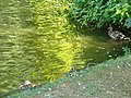 Colourful reflections (328414633).jpg