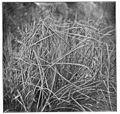 Common Spiders U.S. 457 Argiope trifasciata web.jpg