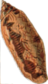 Conus auratus.png