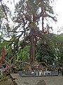 Coronation Throne of Norbugang, Yuksom, Sikkim.jpg