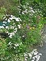 Cottage border - Flickr - peganum (1).jpg