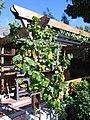Cottages in the Berkeley Biogarden 14.jpg