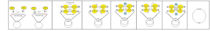 Cre-Lox recombination - Wikipedia