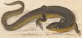Crocodilurus amazonicus 2.png