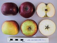 Cross section of Appel van Paris, National Fruit Collection (acc. 1955-010).jpg