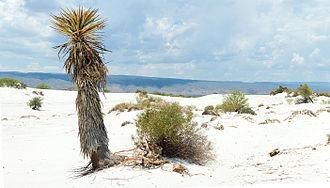 Cuatro Ciénegas - Las dunas de yeso in Cuatrociénegas.
