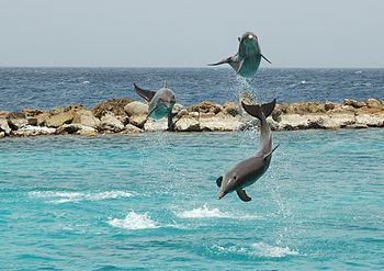 Dolphin show at the Curaçao Sea Aquarium