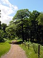 Cycle Trail, Forest of Dean - geograph.org.uk - 199961.jpg