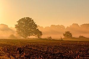 Dülmen, Kirchspiel, Börnste, Felder und Bäume -- 2017 -- 3220-6.jpg