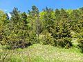 D-BW-BL-Albstadt - Naturschutzgebiet Mehlbaum 1574.JPG