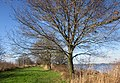 Dammerkade, Ankeveen. - panoramio (3).jpg