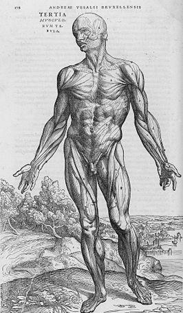 afvalstoffen in het lichaam