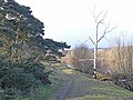 Dead tree by the Tyne - geograph.org.uk - 1700305.jpg