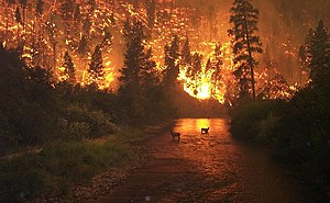A wildfire in the Bitterroot National Forest in the State of Montana.
