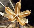 Desert-dry-plant-snd.JPG