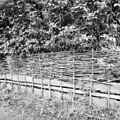 Detail gevlochten erfafscheiding van Fliertakken - Bodegraven - 20036827 - RCE.jpg