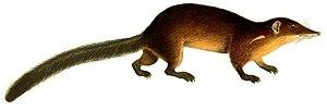 Primatomorpha - 60 px