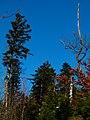 Different Trees - panoramio.jpg