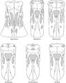 Diplodocoid skulls.png
