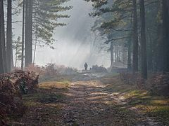 Dirt road in the New Forest at Minstead, Hampshire - (geograph 2714308).jpg