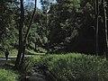 Divoká Šárka - panoramio (37).jpg