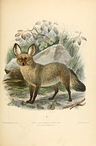 Dogs, jackals, wolves, and foxes (Plate XLV) (5987848041).jpg