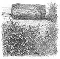 Dolmen Nampteuil sous muret 36964.jpg