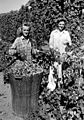 Dorothy and Olgo Brutke picking hops (6427150899).jpg